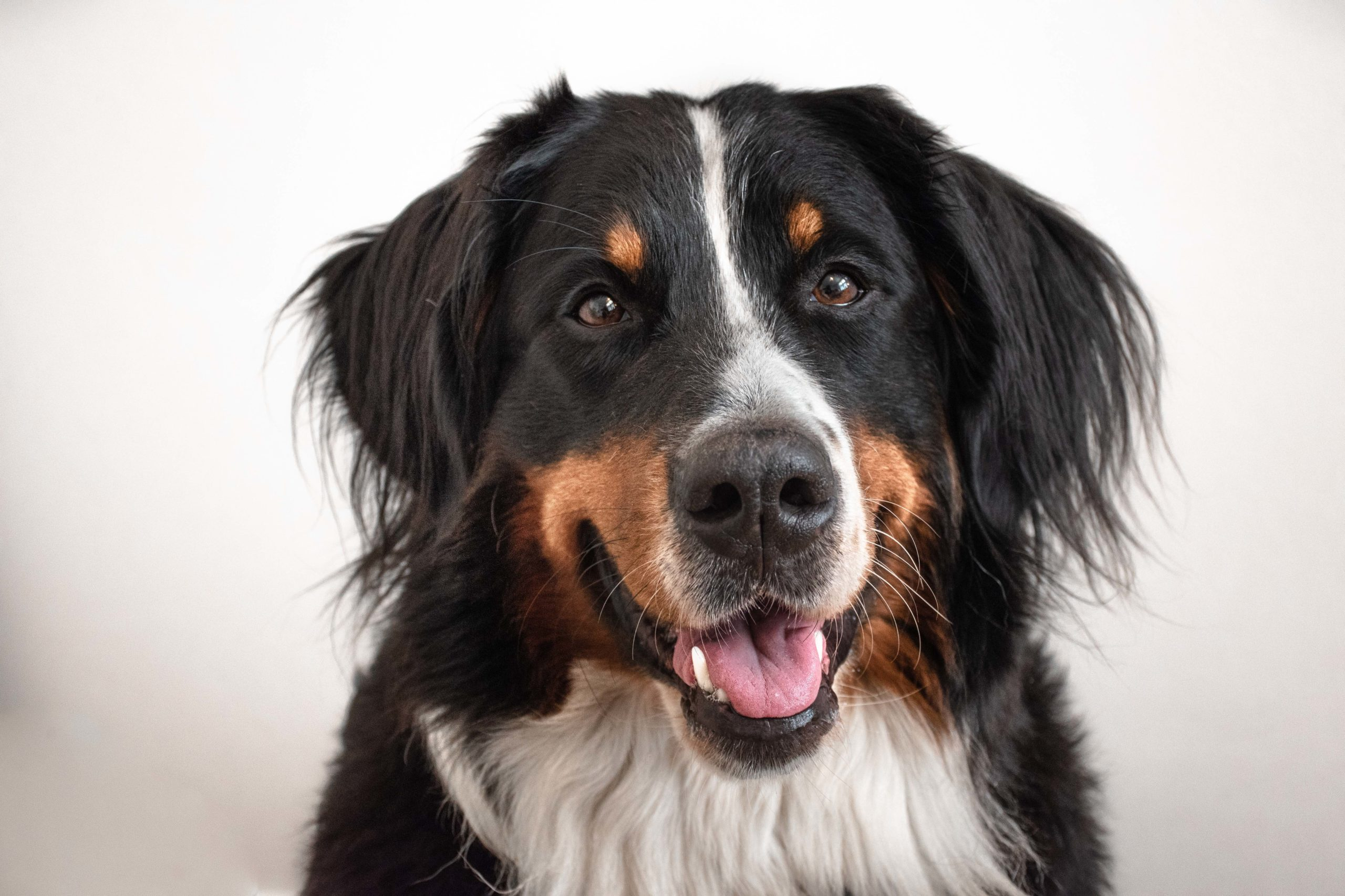 Hunde Krankenversicherung